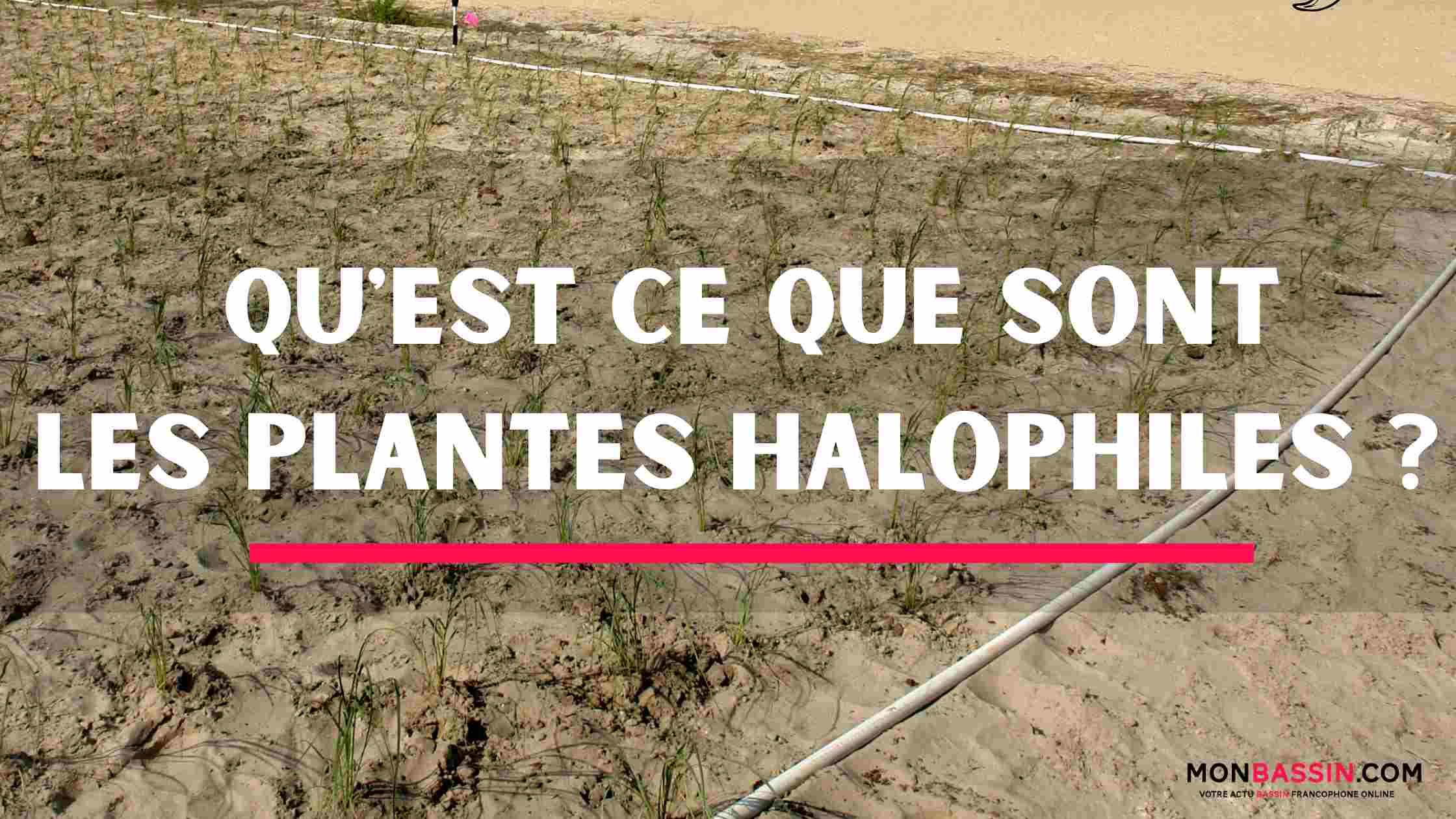 Quelles sont les plantes aquatiques halophiles (halophytes)?