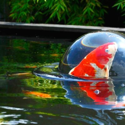 Floating Fish DOME L