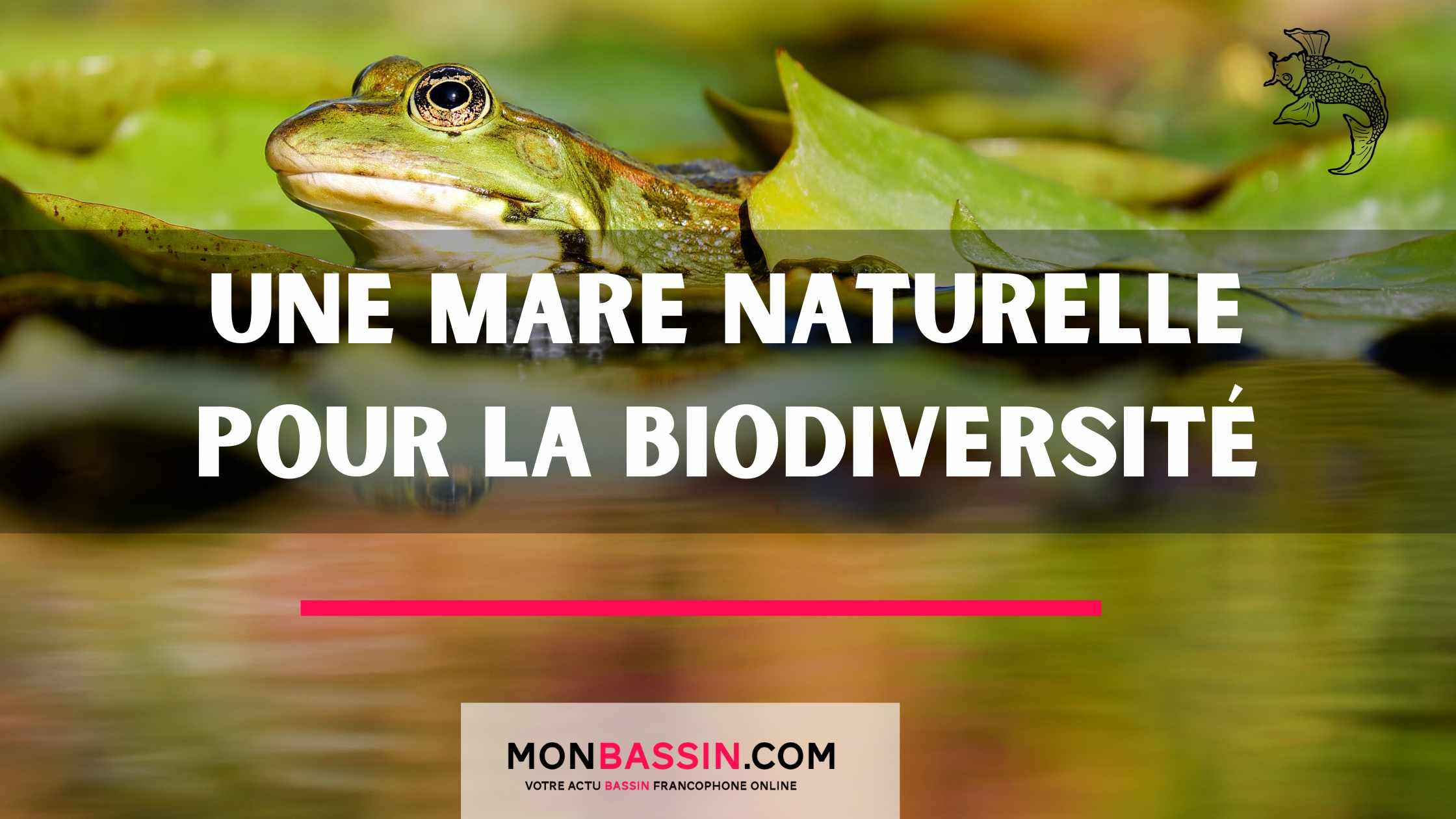 Comment créer une mare naturelle pour favoriser la biodiversité de votre jardin ?