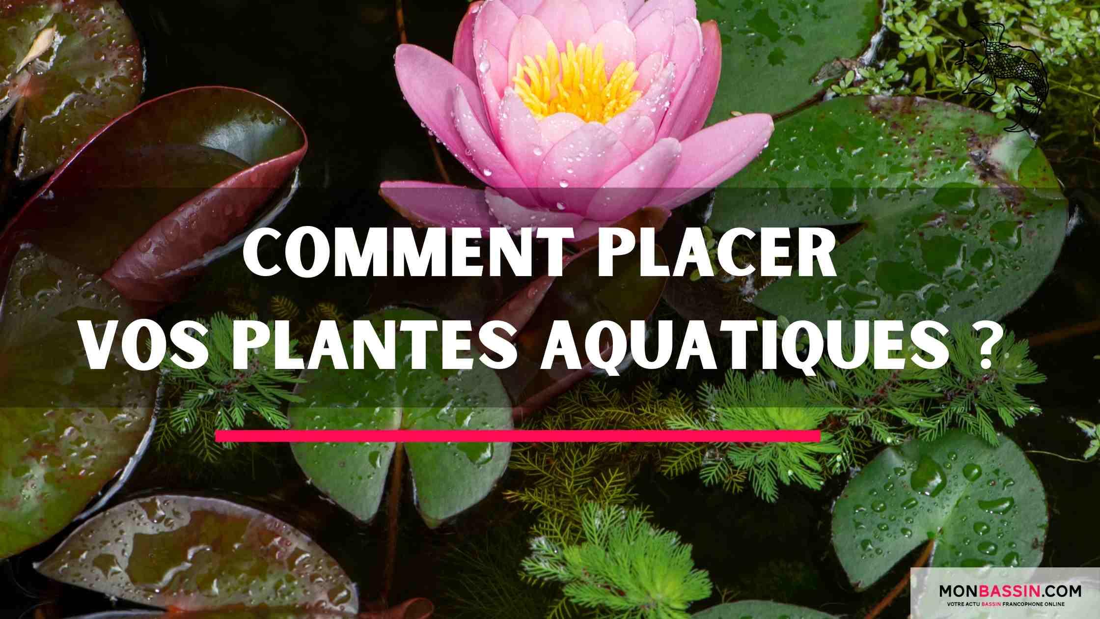 Comment placer vos plantes aquatiques?