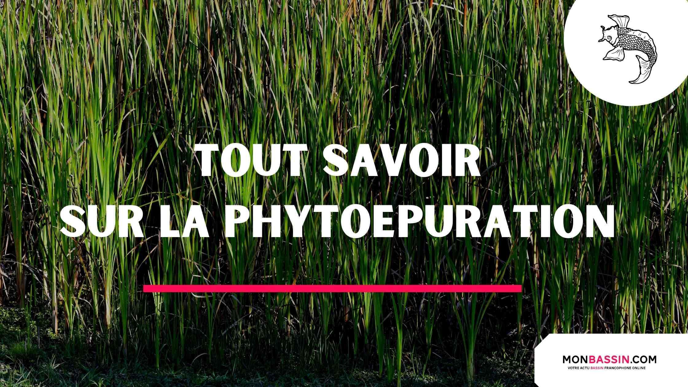 phytoépuration - méthode de traitement des eaux usées par les plantes